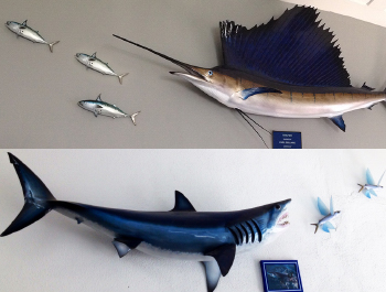Fish Mounts Saltwater And Freshwater Fish Replicas Big
